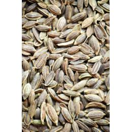 Укроп Семя - 1 кг и 2 кг
