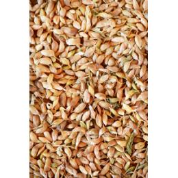 Уцхо-сунели семя - 50гр и 100гр